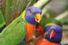Crédit photo : Parc des Oiseaux